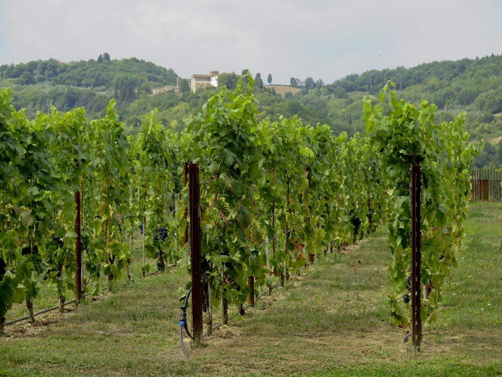 2_vinyard