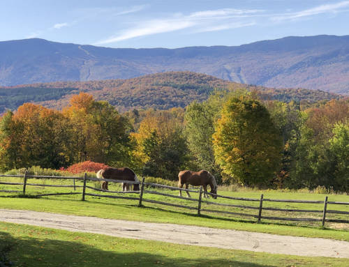 USA #4 – Fall Colors in Vermont