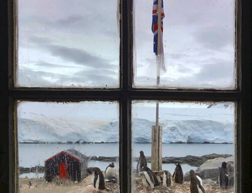 Antarctica #3 – Port Lockroy & Penguins