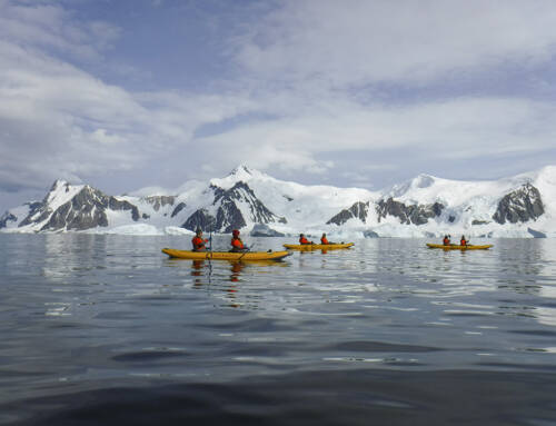 Antarctica #6 – Paddling, plunging and rocking