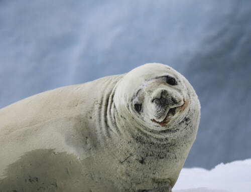 Antarctica #7 – Rough seas and seals